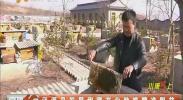 泾源县发展甜蜜产业助推精准脱贫-2018年3月12日