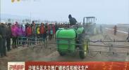 沙坡头区大力推广硒砂瓜机械化生产-2018年4月19日