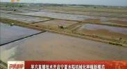 旱穴直播技术开启宁夏水稻机械化种植新模式-2018年4月30日