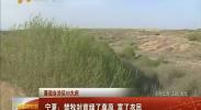 (喜迎自治区60大庆)宁夏:禁牧封育绿了草原 富了农民-2018年4月19日