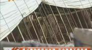 银川掌政惊现泔水猪 安全隐患不容忽视-2018年4月13日