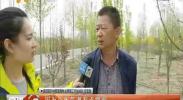 银川110国道附近部分林木出现虫害-2018年4月11日