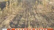 焚烧渠草引发火灾 男子被拘留-2018年4月24日