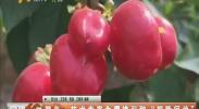 """贺兰:技术专家为樱桃引种""""把脉问诊""""-2018年4月13日"""