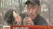 安乐德老人的野山杏树-2018年4月7日