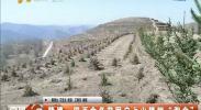 """隆德:四百余名贫困户上山植树""""淘金""""-2018年4月12日"""