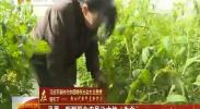 """平罗:新型职业农民让大地""""生金""""-2018年4月3日"""