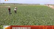 灵武优质蔬菜畅销区内外-2018年5月8日