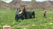 中宁县出台22项脱贫富民农牧业扶持政策-2018年5月2日