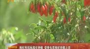 枸杞有机标准化种植 促使头茬枸杞抢鲜上市-2018年5月30日