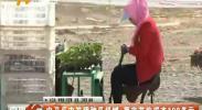 中卫瓜农发明种瓜机械 每亩节约成本100多元-2018年5月17日