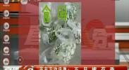 菲菲互动话题:五月槐花香-2018年5月8日