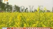 中宁余丁乡:千亩油菜花带动乡村旅游热-2018年5月15日