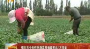 银川市今年供外蔬菜种植面积达7万亩 -2018年5月29日