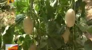 利通区:赏花摘果 体验农耕 生态旅游富民-2018年5月27日