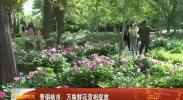 青铜峡市:万株鲜花竞相绽放-2018年5月10日
