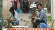 银川大新镇娥嫦渠亟待治理-2018年6月6日