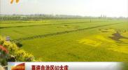 (喜迎自治区60大庆)市民感受银川农业60年发展成就 -2018年6月12日