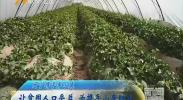 (闽宁携手奔小康)让贫困人口受益 为携手小康助力-2018年6月13日