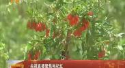 央视直播聚焦枸杞红-2018年6月13日