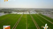 (喜迎自治区60大庆)宁夏休闲农业蓬勃发展 带动农民创业创收-2018年6月2日