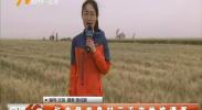 红寺堡龙泉村三千亩地难灌溉-2018年6月6日