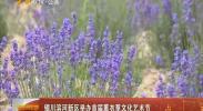 银川滨河新区举办首届薰衣草文化艺术节-2018年6月10日