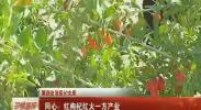 (喜迎自治区60大庆)同心:红枸杞红火一方产业-2018年6月27日