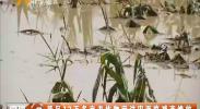 我区12万多亩农作物因洪灾面临减产绝收-180724