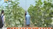 """航天蔬菜有望""""走入""""寻常百姓家-2018年7月6日"""