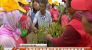 红寺堡区首届黄花菜采摘技能竞赛开幕-180711