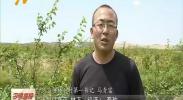 红寺堡乌沙塘村:用产业带动贫困户奔小康-180824