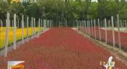 【喜迎自治区60大庆】银川市:大庆花卉准备工作有序推进-180808