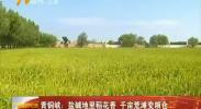 青铜峡:盐碱地里稻花香 千亩荒滩变粮仓-180909