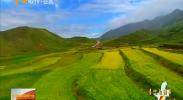(喜迎自治区60大庆·生态立区新画卷)宁夏:中南部生态恢复呈现三十年来最好水平-180907