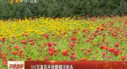500万盆花卉扮靓银川街头-180906