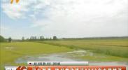 河水倒灌 银川掌政镇近3000亩水稻被淹-180904