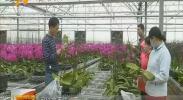花卉产业进乡村 农民家门口实现就业增收-181029