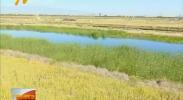 中华环保世纪行督办银川人工湿地等项目进度-181006