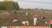 """种地黄有""""钱""""途 中宁开辟中药材种植致富路-181110"""