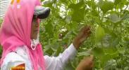 石嘴山市:瓜菜业助力农业经济腾飞-181120