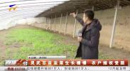 4G直播:灵武韭菜生长缓慢 农牧部门来帮忙-181205