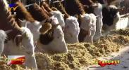 """(新时代担当作为典型风采)杜宗会:让党支部成为引领产业发展的""""领头羊""""-181216"""