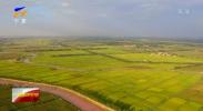 (伟大的变革中的宁夏元素)宁夏:市场化改革激发农业活力-181222