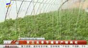 贺兰反季节蔬菜产销两旺-190122
