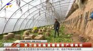 贺兰县设施温棚蔬菜产销两旺-190109