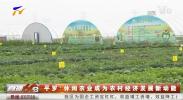 平罗:休闲农业成为农村经济发展新动能-190118