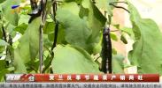 贺兰反季节蔬菜产销两旺-190209