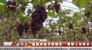 中卫:葡萄种植另辟蹊径 富路上收获多-190209