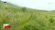 见证履职|冀永强:提质改造人工生态林 推动北方生态屏障可持续发展-190312